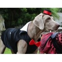 Dog Tuxedo - Large Breed